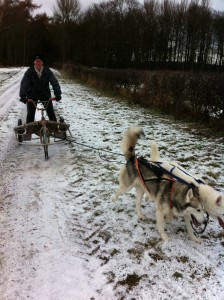 Siberian Husky Personal Website Of Two Husky Owners In The Uk